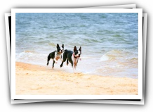 off leash dog beach pet friendly pensacola florida