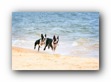 pensacola florida off leash dog friendly pet beach